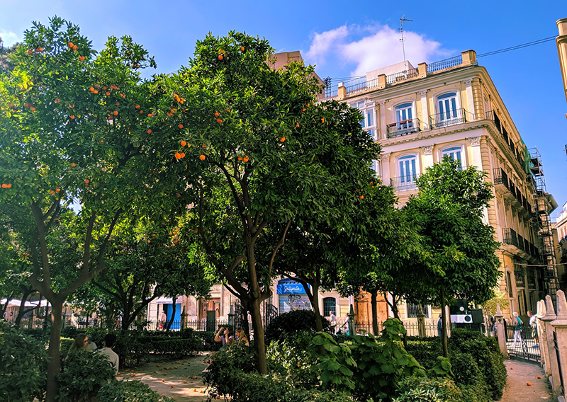 Orange Trees Valencia, pic by @timhouse